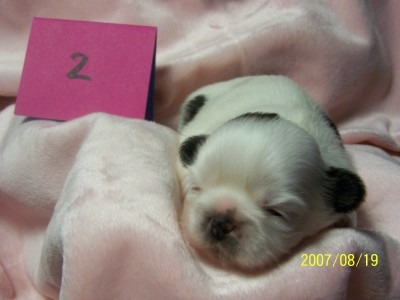 Snowball 2 weeks