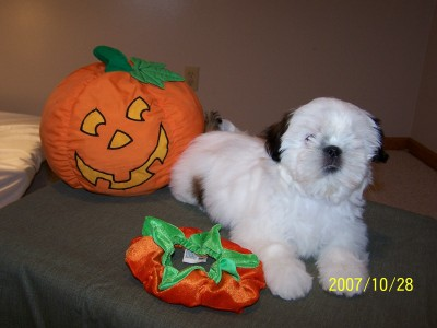 Snowball 12 weeks!
